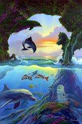 Dolphins -  Loài Cá Heo