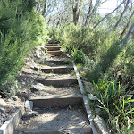 Steps on Merrits Nature Track (276146)
