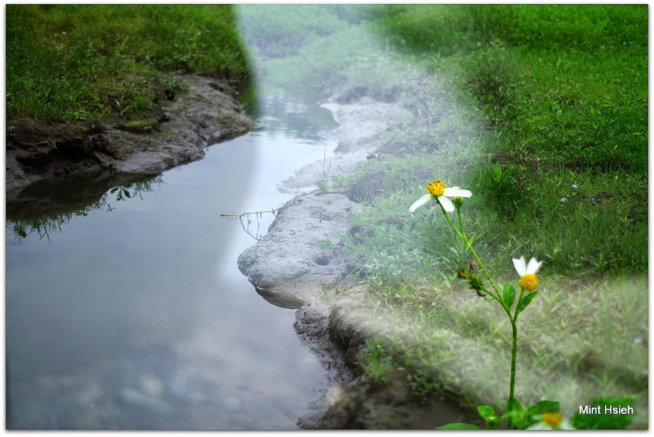 來 台東  Spring  (圖22枚)