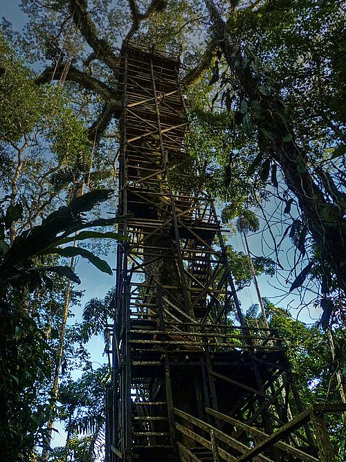 Kapok tree tower