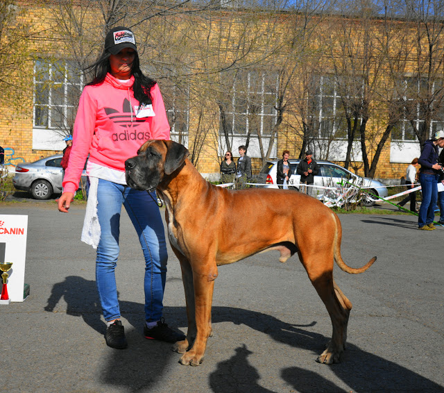 Кубок Аризоны-14(ПК)+ЧРКФ, Красноярск, 27 апреля 2014 DSC_5809
