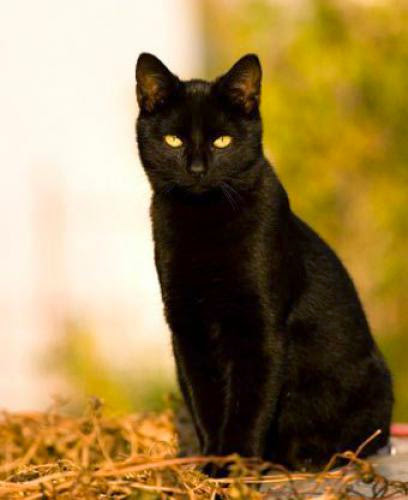 Black Cats And Magpies Superstitions Today