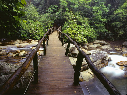 Footbridge and Rhododendrons, Great Smoky Mountains National Park, Tennessee.jpg