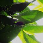 20120526尋找金色幸蝠