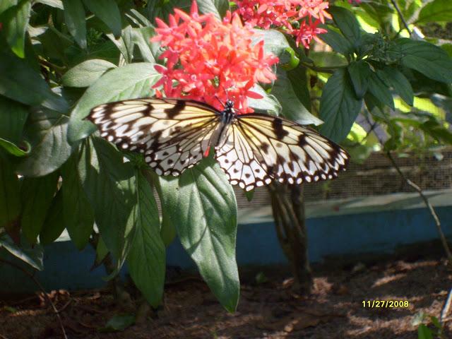 Из зимы в лето. Филиппины 2011 - Страница 8 S6301077