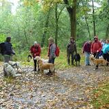 Op weg in het bos met de blindengeleidehonden