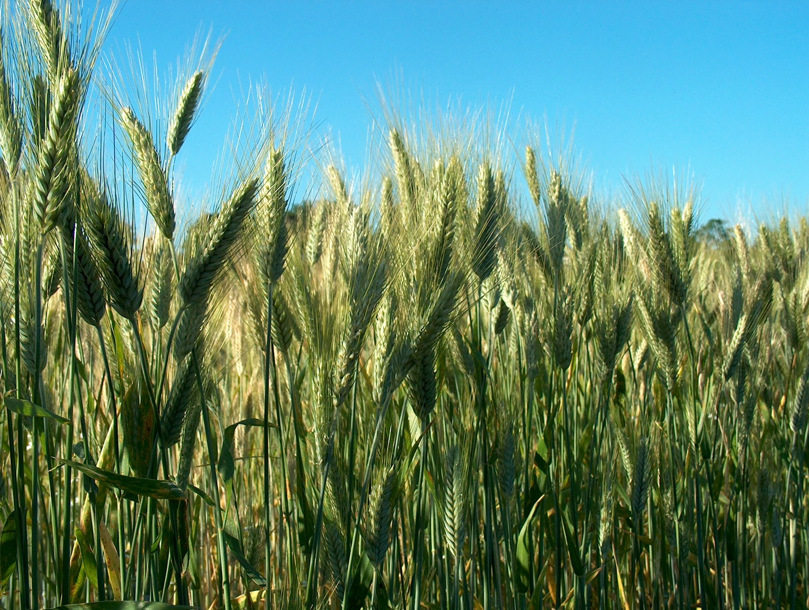 impact of commodity prices on agriculture industry The impact of biofuels on commodity food prices: assessment of  the ethanol industry and the other  a significant impact on food commodity prices,.