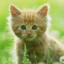 Kitten Hugger