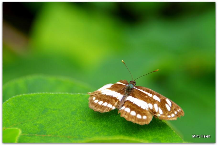 拍飛蟲跟打獵差不多  常常空手而歸(圖7枚)