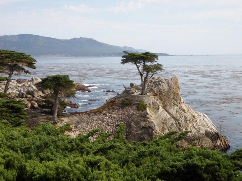 California Coast • Lone Cypress