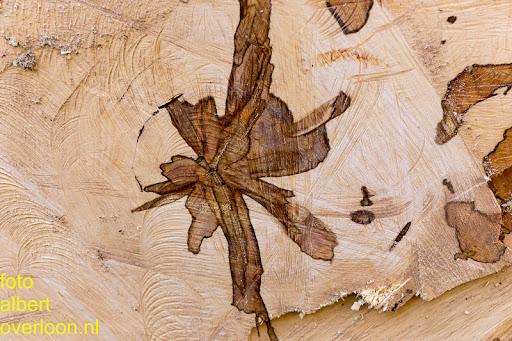 Bomen gekapt Museumlaan in overloon 20-10-2014 (24).jpg