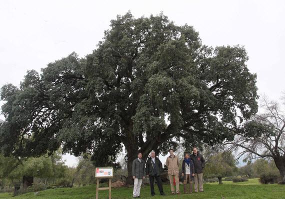 árboles singulares catalogados