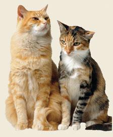 Nature S Logic Cat Food Recall