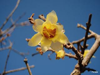 110102花ファンタジア