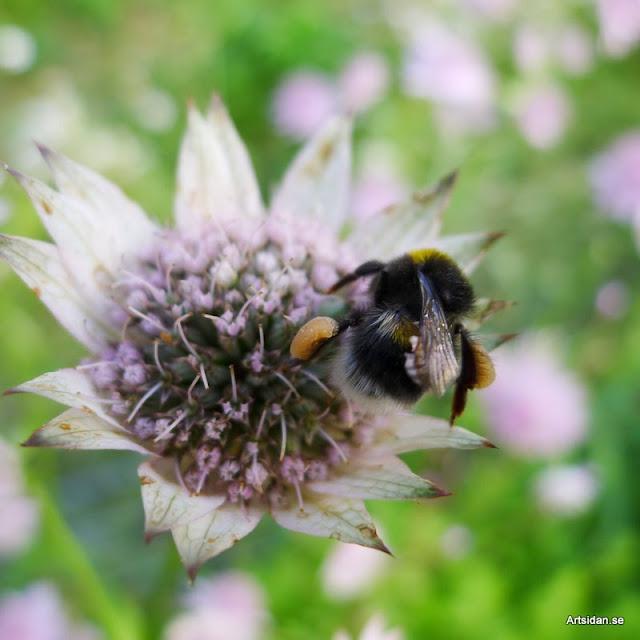 pollenkorgar