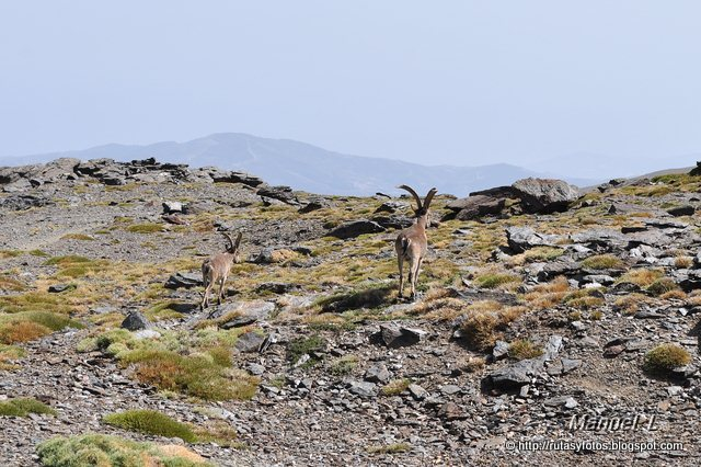 Subida al Mulhacén desde el Alto del Chorrillo