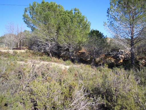 Particular vende terreno en Alborache (Valencia)  - Foto 5