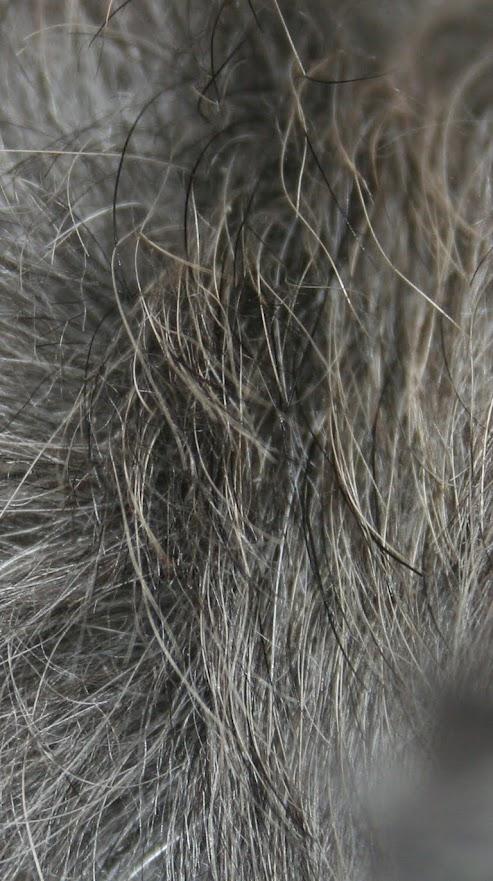 Close-up of salt and pepper coat