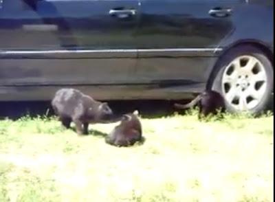 【動画】猫同士が本気でケンカ・・・。そこに犬が登場、まさかの展開に