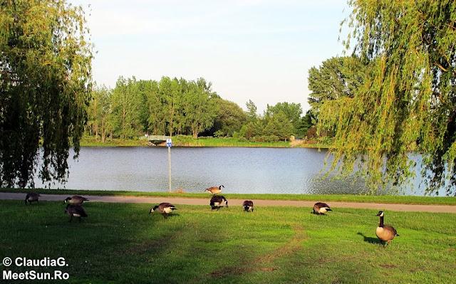 gastele in parc