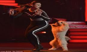 كلب يفوز بلقب الموهوب البريطاني