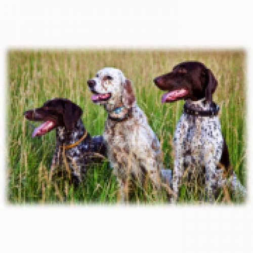 Canine Behaviour Training Course