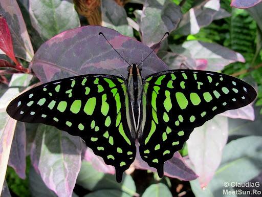 "Vizita la Gradina Botanica - Expozitia ""Butterflies go free"" si serele"