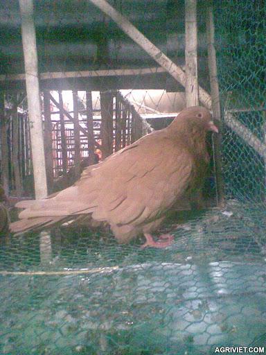 Agriviet.Com-T11043.jpg