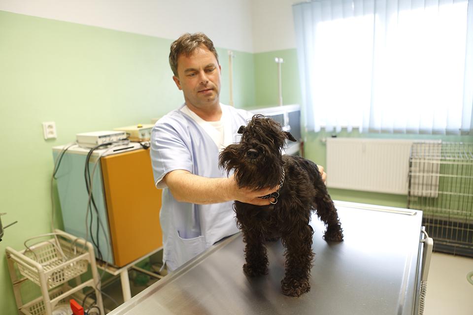 ZvolenVet - Veterinárna Klinika - Where To  c53cecd3ffc