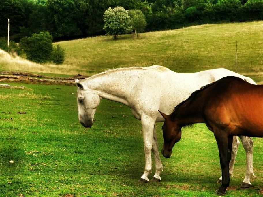 Cavalls d'Stonehenge (editada)