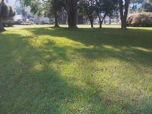 Sol sobre la grama, cerca de la estatua de Bolívar