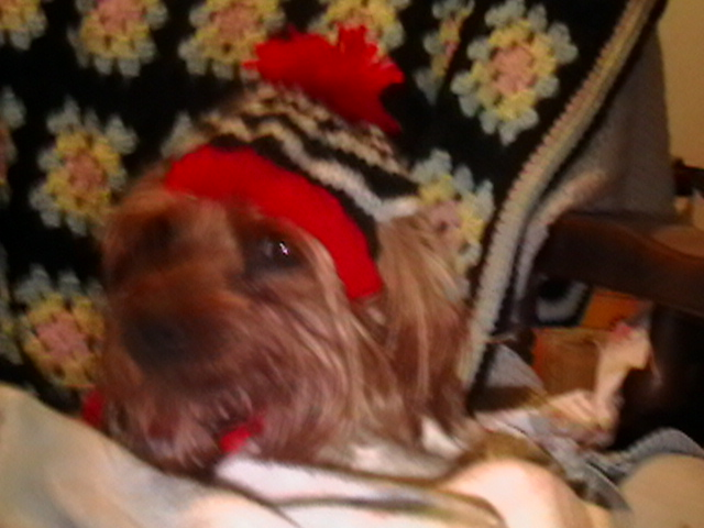 Knit And Crochet Dog Hats