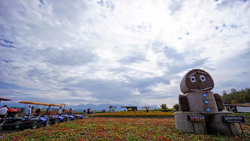 美瑛 四季彩の丘 写真7