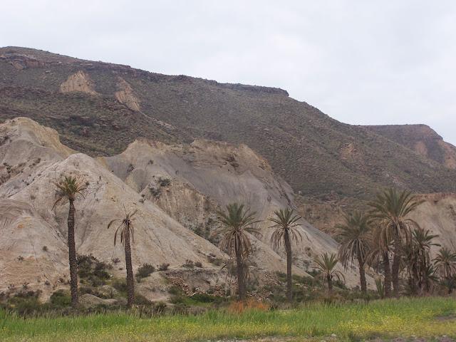 Oasis en el desierto de Tabernas