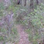 Fredericks Track (305396)