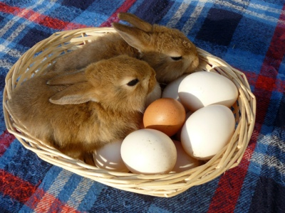 Silent Sunday French village diaries Easter bunnies Easter eggs