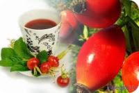 настой плодов шиповника