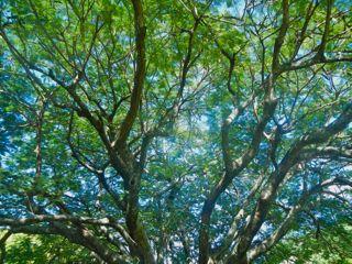 DSCN7090_2-2012-12-4-09-07.jpg