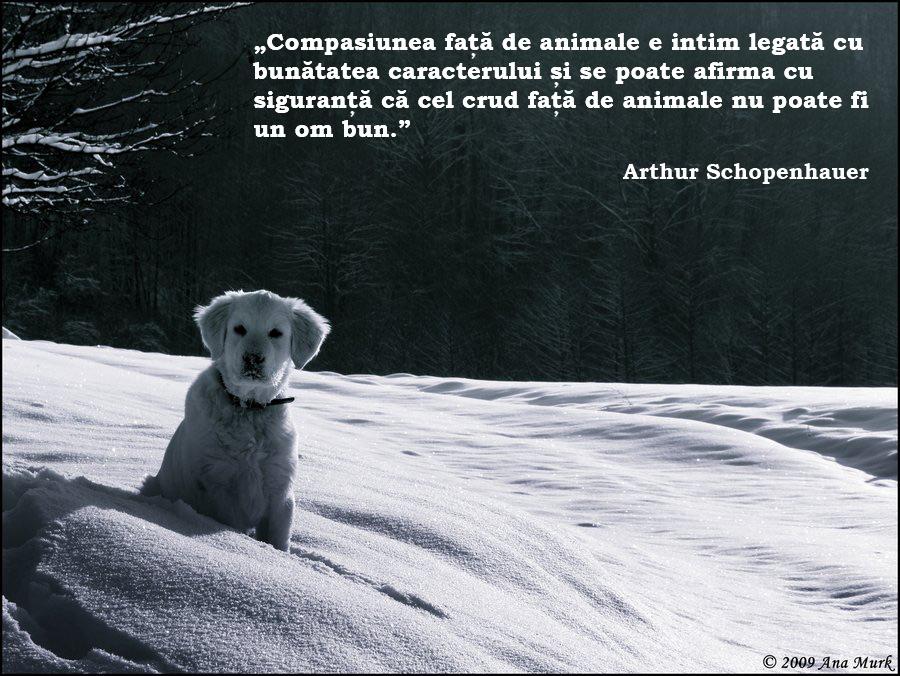 citate despre animale Citate Celebre   Google+ citate despre animale