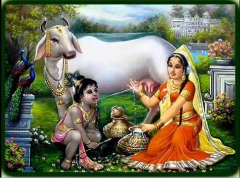 Importance And Benefits Of Cow-Urine & Cow-Dung