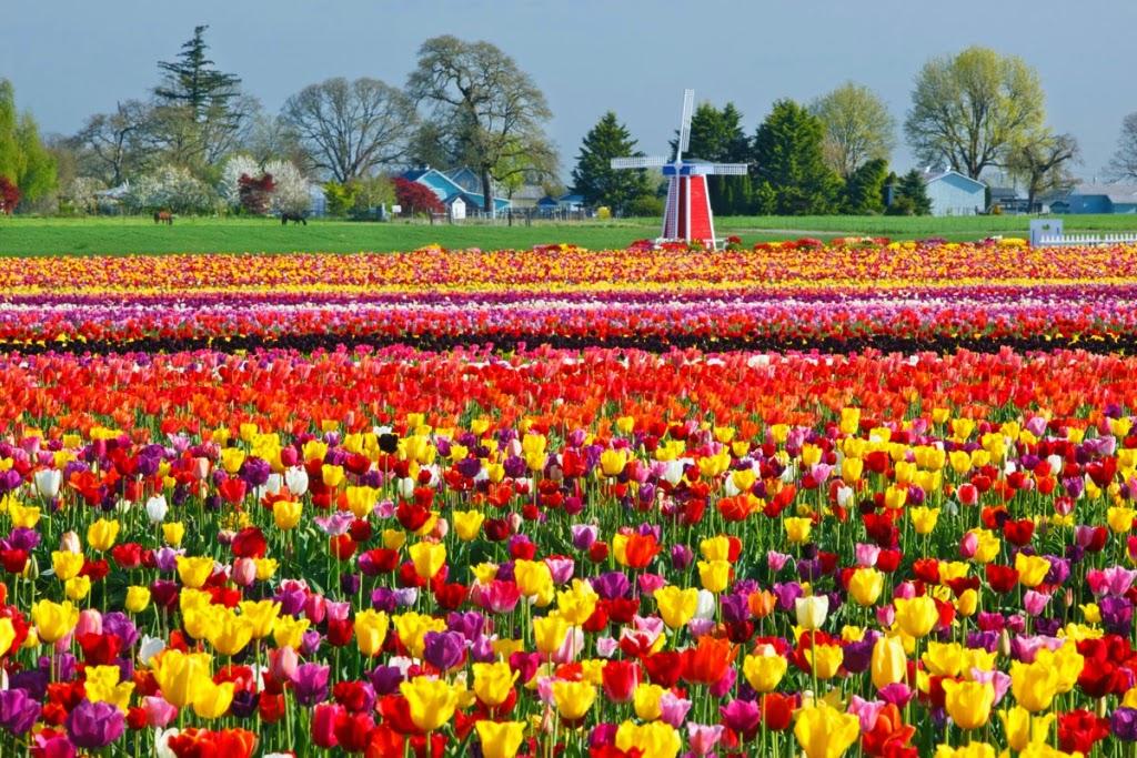 Top 100 paesaggio sfondo desktop primavera sfondo italiano for Immagini sfondo desktop primavera