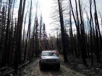 Burned trees near Star Point