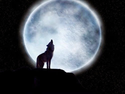 Archetype Totem Animal Wolf The Brave One