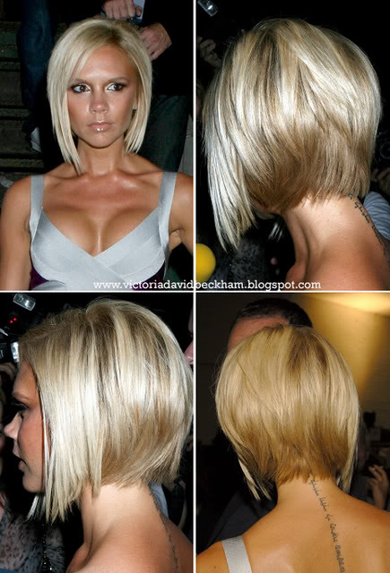Petit Site Of Star Pixie Bob Side Back View