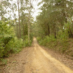 Undulating Monkey Face road near Gap Creek viewpoint in the Watagans (323063)