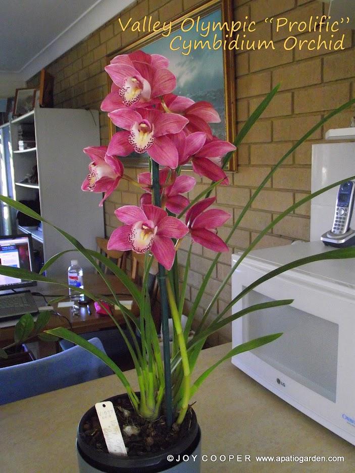 Even More Pretty Flowers 007