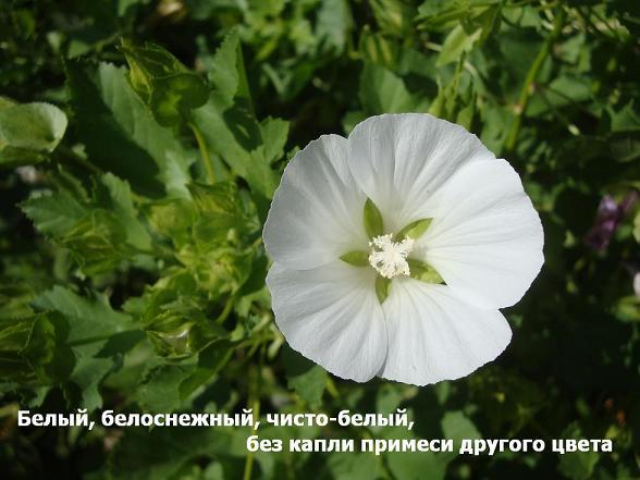 оттенки белого цвета