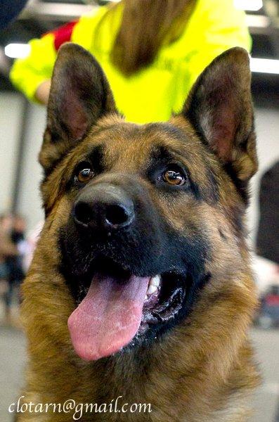 Les méthodes positives et amicales en éducation canine - Page 4 ExpoBdx-0871
