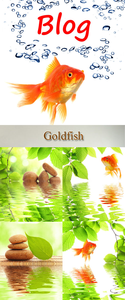 Stock Photo: Goldfish, water, greens of leaflets and stones for Spa