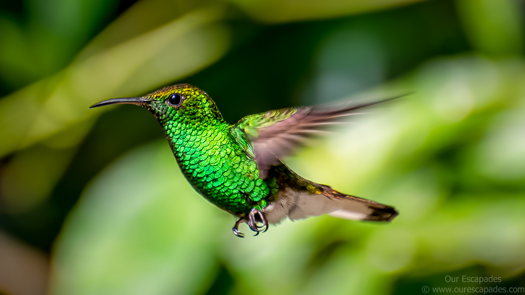A beautiful humming bird